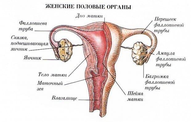 Гинекологические болезни